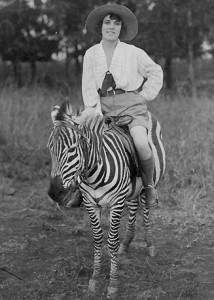 Reizigster zebra